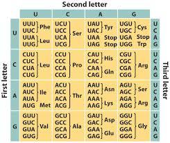 week 10 class 1 group 1 1 understanding evolution spring