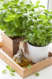 herbe cuisine herbe fraîche de basilic dans la fenêtre de cuisine d huile d