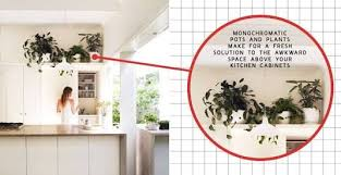 plants for on top of kitchen cabinets plants above kitchen cabinets search above