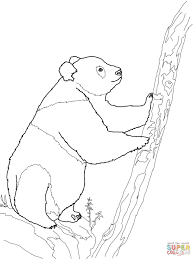 giant panda is eating bamboo coloring page free printable