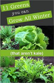 best 25 winter garden ideas on pinterest fall planting