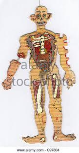 Cartoon Human Anatomy Diseases Cartoon Stock Photos U0026 Diseases Cartoon Stock Images Alamy