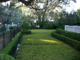 Bushes For Landscaping Small Shrubs For Hedges Bushes To Use In Hedge Landscaping