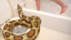Snake Bathtub Snake In The Bathroom Youtube