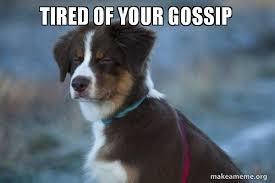Tired Dog Meme - tired of your gossip unsure dog make a meme