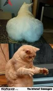 Meme Dat - dat ass cat edition funny meme pmslweb