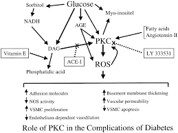 vascular dysfunction in hyperglycemia circulation research