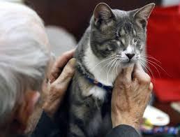 Blind Cat Sanctuary Blind Cat Captures Hearts Leaves Behind Smiles News U0026 Observer