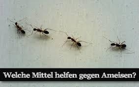 ameisen k che spray gegen ameisen selber machen frag mutti beautiful was tun