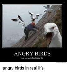 Meme Angry - angry birds not as much fun in real life we know memes angry birds