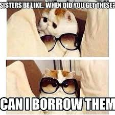 Sister Memes Funny - funny sister quotes plus top sister funny quotes brilliant best