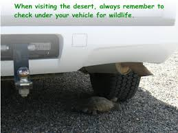 Resting Space Information For Ohv Users Desert Tortoise Preserve Committee