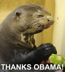 Sea Otter Meme - otter eats watermelon but does not enjoy it pics