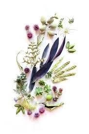 267 best backgrounds images on pinterest botany jo o u0027meara and