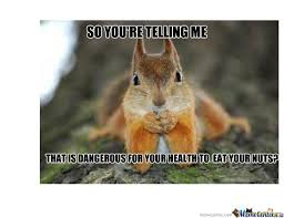Dramatic Squirrel Meme - sceptical squirrel by randall82 meme center