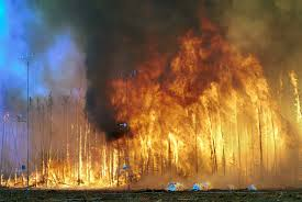 Wildfire History by Controlled Burn Wikipedia