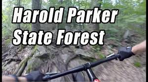 Harold Parker State Forest Map by Harold Parker State Forest Mtb Trail Report Youtube