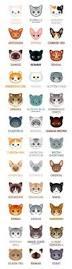 30 best veterinary dentistry vcs images on pinterest dentistry