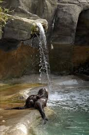 West Virginia wild animals images 11 best west virginia wildlife images west virginia jpg