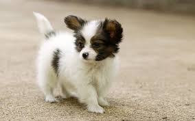 Dog Wallpapers Dog Wallpapers Download