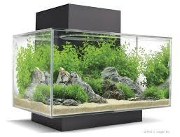 designer aquarium desktop aquariums bespoke designer aquariums custom fish tank