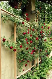 how to make a rose trellis cheap and more attractive than a lot