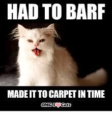 Omg Cat Meme - 25 best memes about omg cats omg cats memes