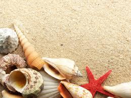 beach shells wallpaper bing images beachin pinterest shell