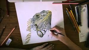 iguana time lapse drawing youtube