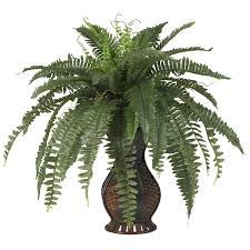 indoor plants you ll wayfair
