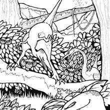 coloriages deux diplodocus fr hellokids com