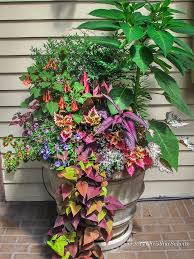 703 best container gardening ideas images on pinterest pots