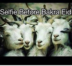 Eid Memes - eid al adha bakra selfie memes pinterest eid memes and humor