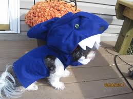 custom made to order shark dog halloween costume for smaller