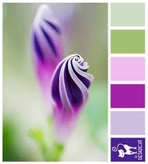 pink complimentary color morning glory purple green pink lilac designcat colour