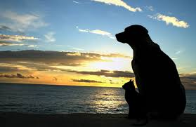 pet bereavement arf pet loss support