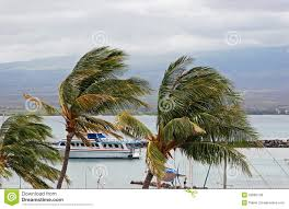 tour boat and palm trees royalty free stock images image 22082149