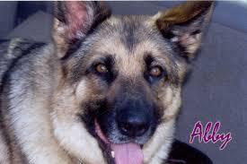 Canine Creature Comforts Creature Comfort Pictures
