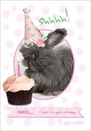 rabbit birthday bunny rabbit birthday cards funky pigeon