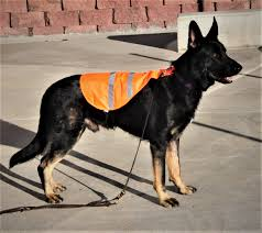 reflective safety vest for all dogs compatible with guide and