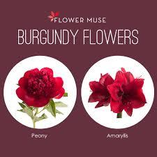 burgundy flowers our favorite burgundy flowers flower muse