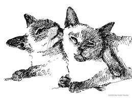 cat drawings siamese 2 drawing by gordon punt