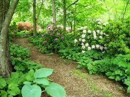 Planning A Backyard Garden by Best 25 Wooded Backyard Landscape Ideas On Pinterest Wooded