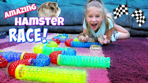 Petsmart Hamster Cages Amazing Hamster Race Maze 3 Hamsters Racing In Hamsters Cage Tubes
