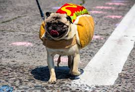 hotdog dogs dress up as hotdogs for a tasty halloween photo