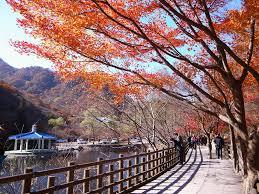 Nicklee 內藏山國立公園 내장산국립공원 Nick Lee Flickr