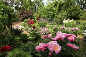 Louisville Botanical Gardens by Specimen Garden Gardens Louisville Ky Whitehall Mansion