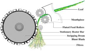 fibers free full text agave americana leaf fibers html