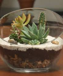 How To Make A Succulent Planter How To Make A Terrarium Video And Step By Step Instructions
