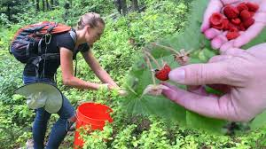foraging for wild edible plants u0026 bartering with free forest food